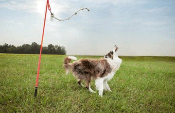 Tether Tug Outdoor Dog Toy
